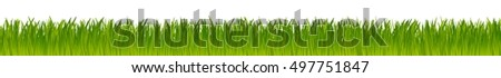 green natural vector grass field isolated on white background
