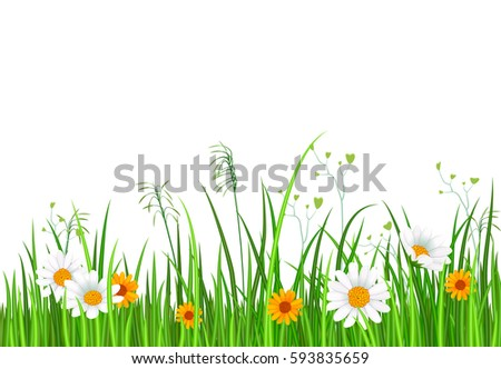 stock vector green nature border with grass and chamomile flower isolated on white background vector 593835659