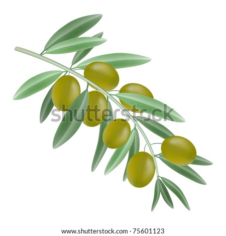 green olives on branch vector