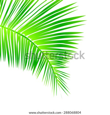 Green palm leaf. Vector