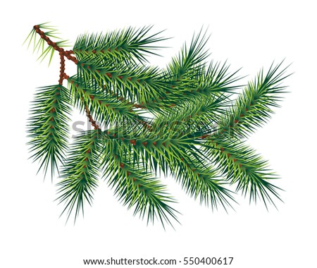 Green pine tree branch, isolated on white background. Vector illustration