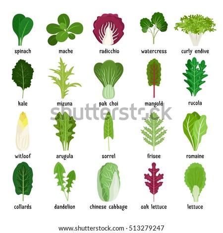 lettuce leaf stock images royalty free images amp vectors