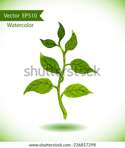 Green spring sprout with leaves. Ecologic watercolor vector