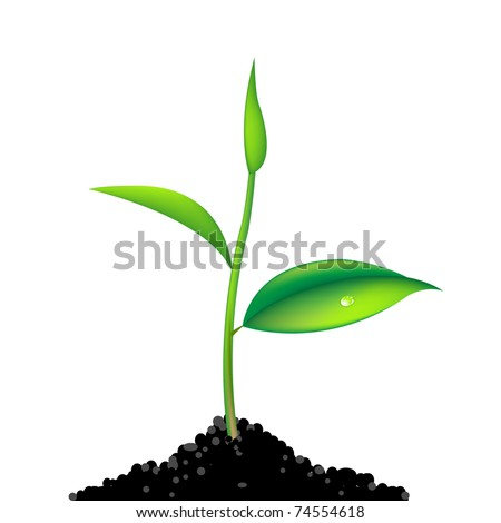 Green Sprout, Isolated On White Background, Vector Illustration - stock vector