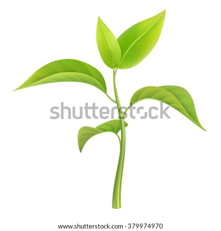 Green sprout, small branch young plant, vector illustration, isolated. - stock vector