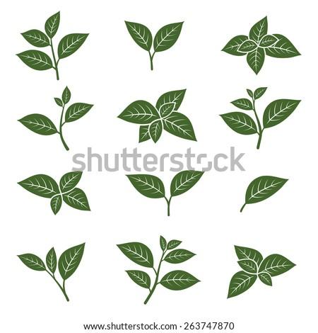 Tea Leaves Clip Art - Royalty Free - GoGraph