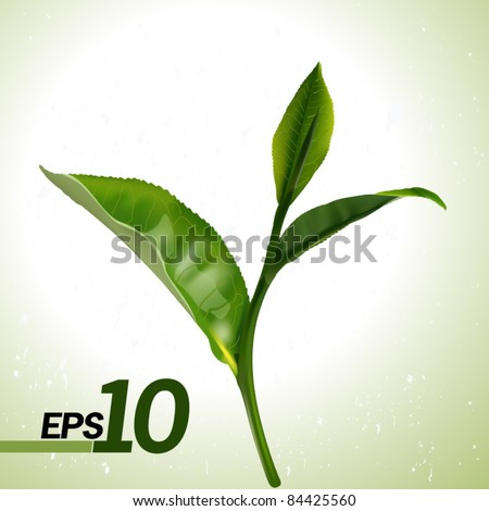 Green tea leaf isolated on white background. Vector. EPS 10.