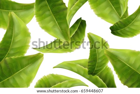 green tea leaves, can be used as design elements white background 3d illustration