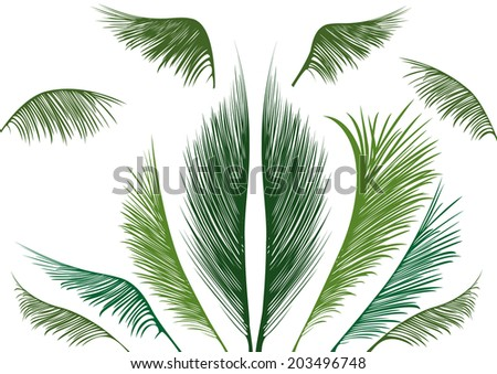 green tropical palm leaves on white background - stock vector