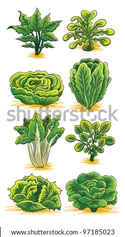 Green Vegetables Collection - stock vector