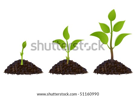 Green young plant life process, Isolated On White - stock vector