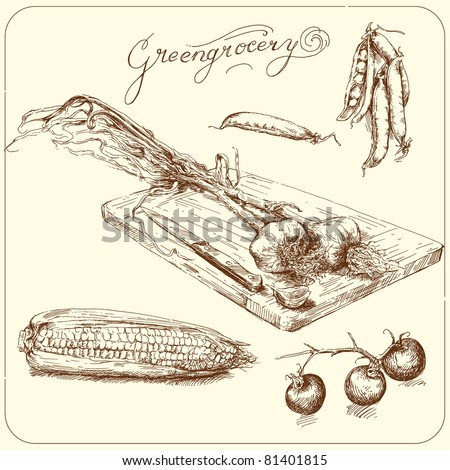 greengrocery - hand drawn vegetable - stock vector