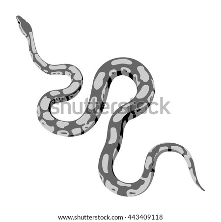 Grey python snake vector isolated on white background