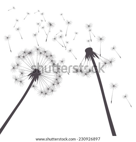 grey vector dandelions