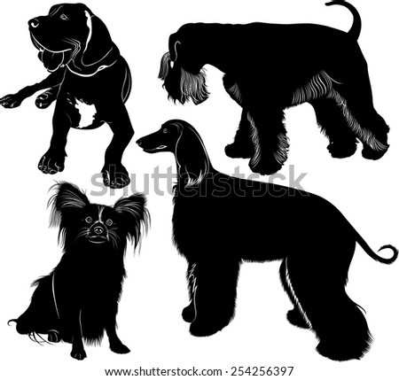 greyhound mastiff Miniature Schnauzer chihuahua