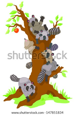 Group of cute baby Raccoons dominating and climbing an old leafless persimmon tree in isolated background, create by cartoon vector  - stock vector