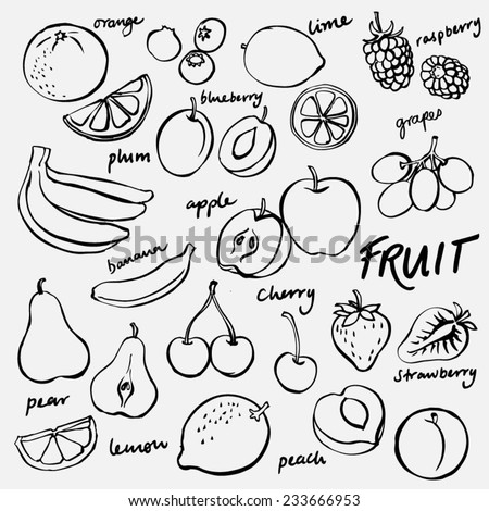 Group of fresh fruit doodle vector set