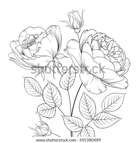 Group Rose Flowers Floral Background Blooming Stock Vector ...