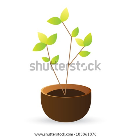 grow tree green leaves on white background