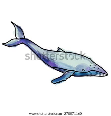 Grunge humpback whale illustration - stock vector