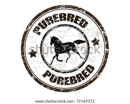 Grunge rubber stamp with horse silhouette and the word purebred written inside the stamp - stock vector