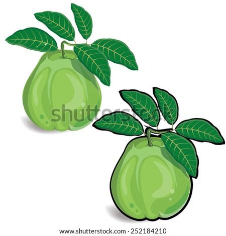 guava, fruit vector illustration on white - stock vector