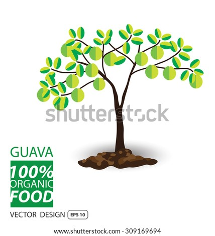 Guava, fruits vector illustration. - stock vector