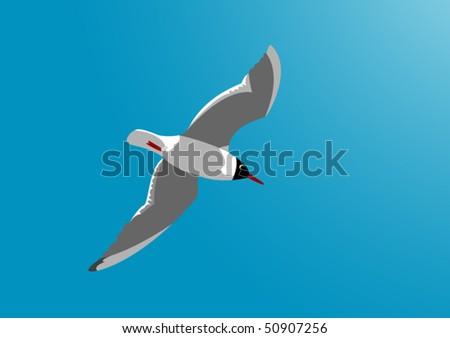 Gull - stock vector