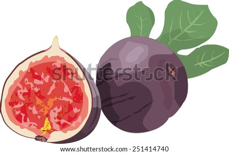 half fig - stock vector