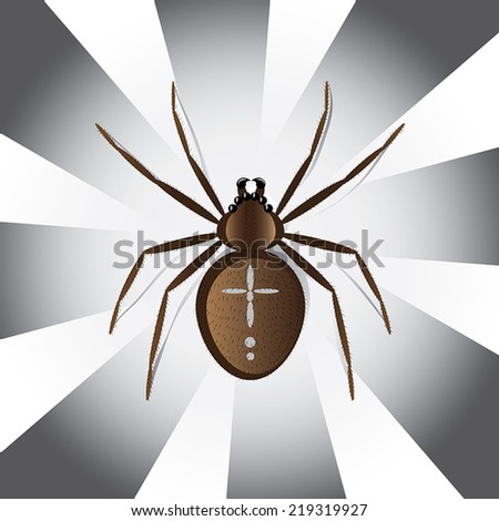 Halloween collection - European garden spider vector illustration