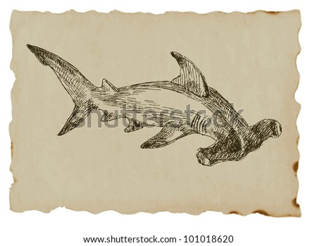 Hammer head shark - hand drawing of an animal on the brown paper. - stock vector