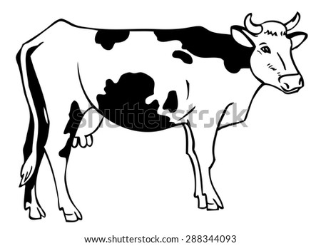 hand drawing a cow with spots on a white background