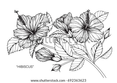 Hand drawing and sketch with hibiscus flower black and white line art illustration