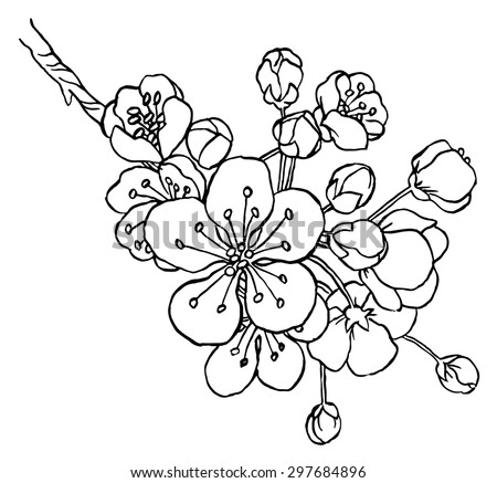 Hand Drawing Apple Tree Branch Blossom Stock Vector