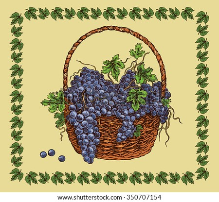 hand drawing basket with ripe black grape - stock vector
