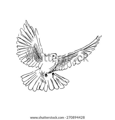 dove sketch stock images royaltyfree images amp vectors