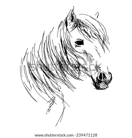 Hand drawing horse head - stock vector