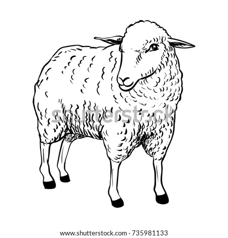 hand drawing of cartoon sheep sketch design for coloring bookvector illustration
