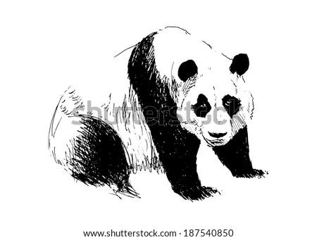 Hand drawing panda. Vector illustration - stock vector