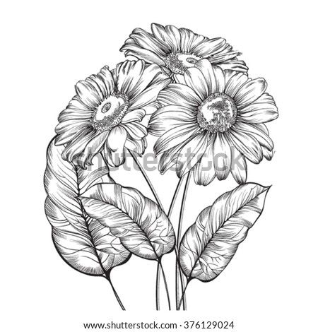 Hand drawing pen and ink of three garden 