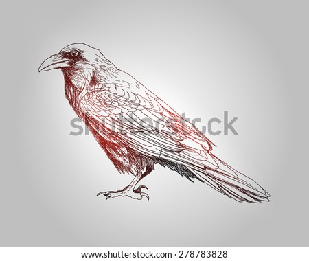 Hand-drawing raven bird - stock vector
