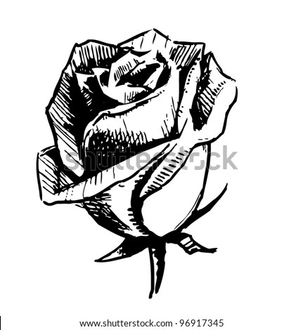 Hand drawing rose bud. Sketch vector illustration