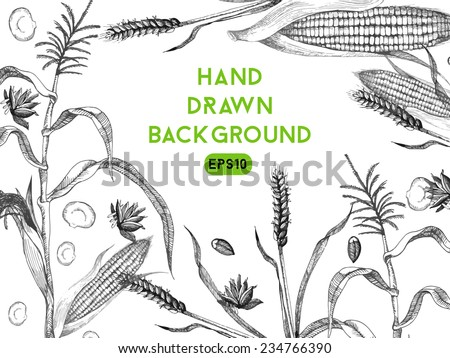 Hand drawing vector background of wheat and maize - stock vector