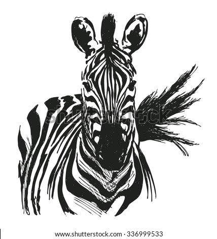 Zebra Stock Photos Royalty Free Images Amp Vectors