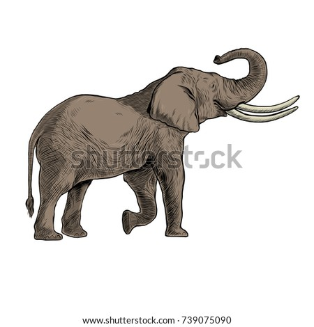 Hand drawn African elephants with black line art
