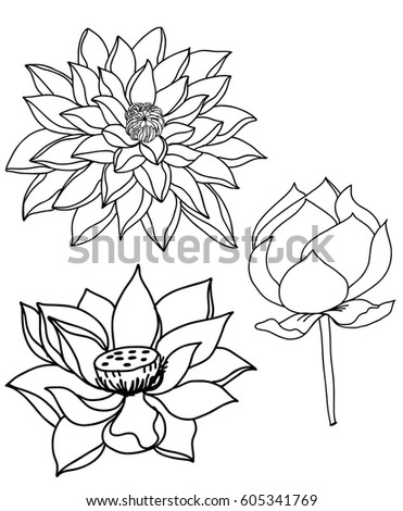 Hand drawn sketch lotus flower stock photo photo vector hand drawn and sketch lotus flower mightylinksfo
