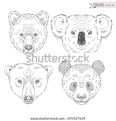 hand drawn animal set of bears heads - stock vector