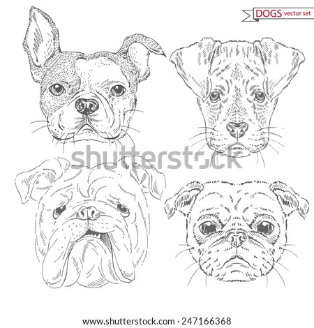 hand drawn animal set of dogs - stock vector