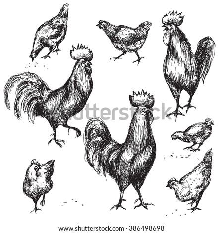 Hand drawn animalistic illustration. Image of rooster isolated on white. Cocks and hens sketch. - stock vector
