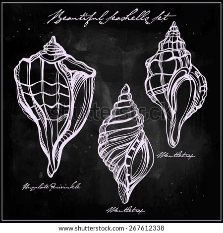 Hand drawn beautiful linear collection set, group of seashells. Isolated, chalk on chalkboard. Vector illustration. Vintage sea marine life scallop mollusks icon sign. Elegant summer decoration.  - stock vector